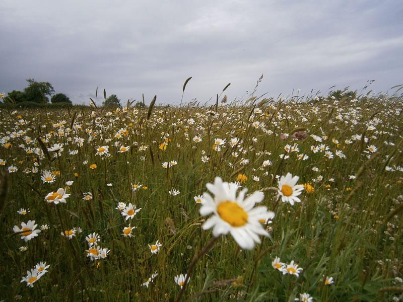 essex meadow trip 004