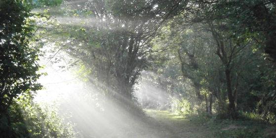 swan lane morning mist